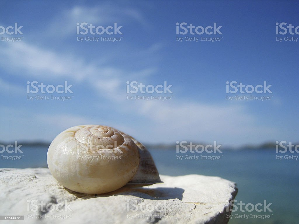 snail house on the beach and dalmatian islands stock photo