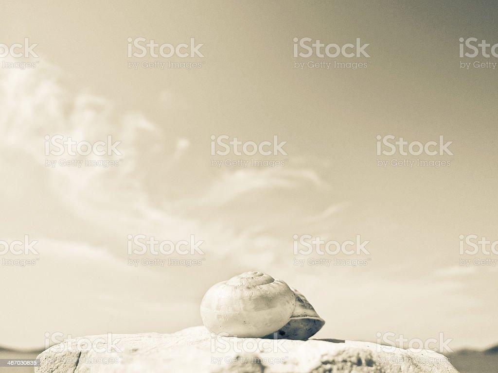 snail house on the beach stock photo