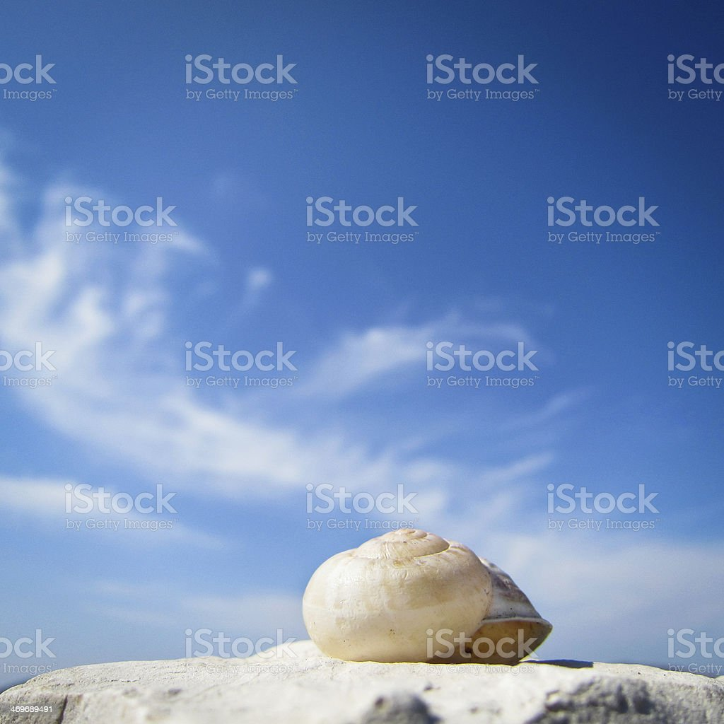 snail house on the beach,  square stock photo