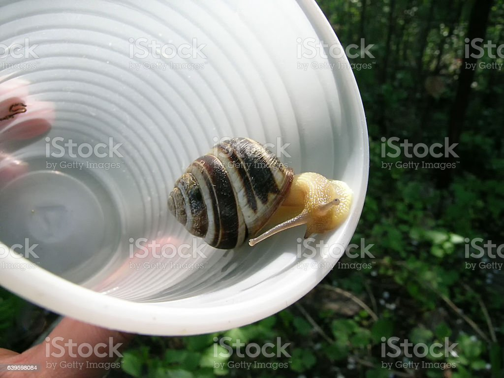Snail in a plastic stock photo