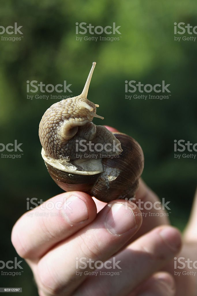 Snail in Hand stock photo