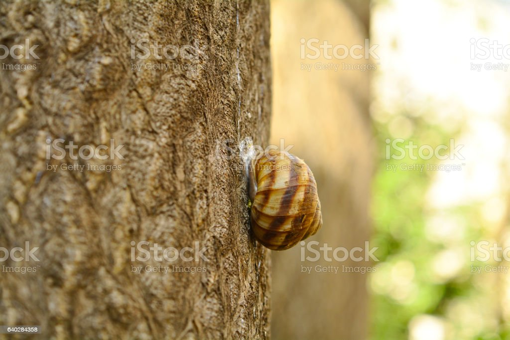 snail in tree stock photo