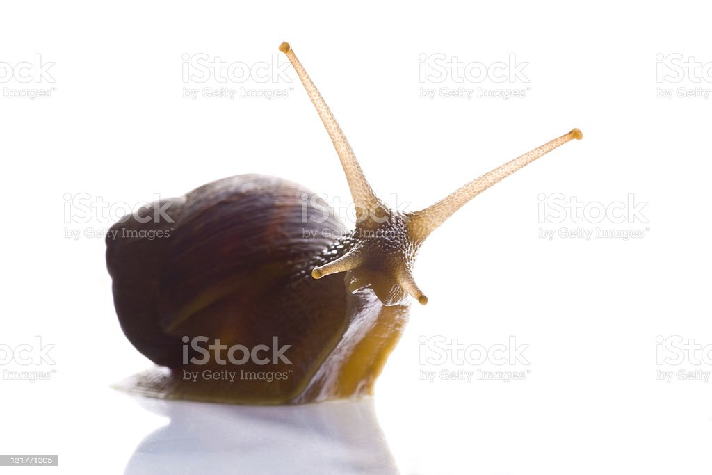 Snail look at you stock photo