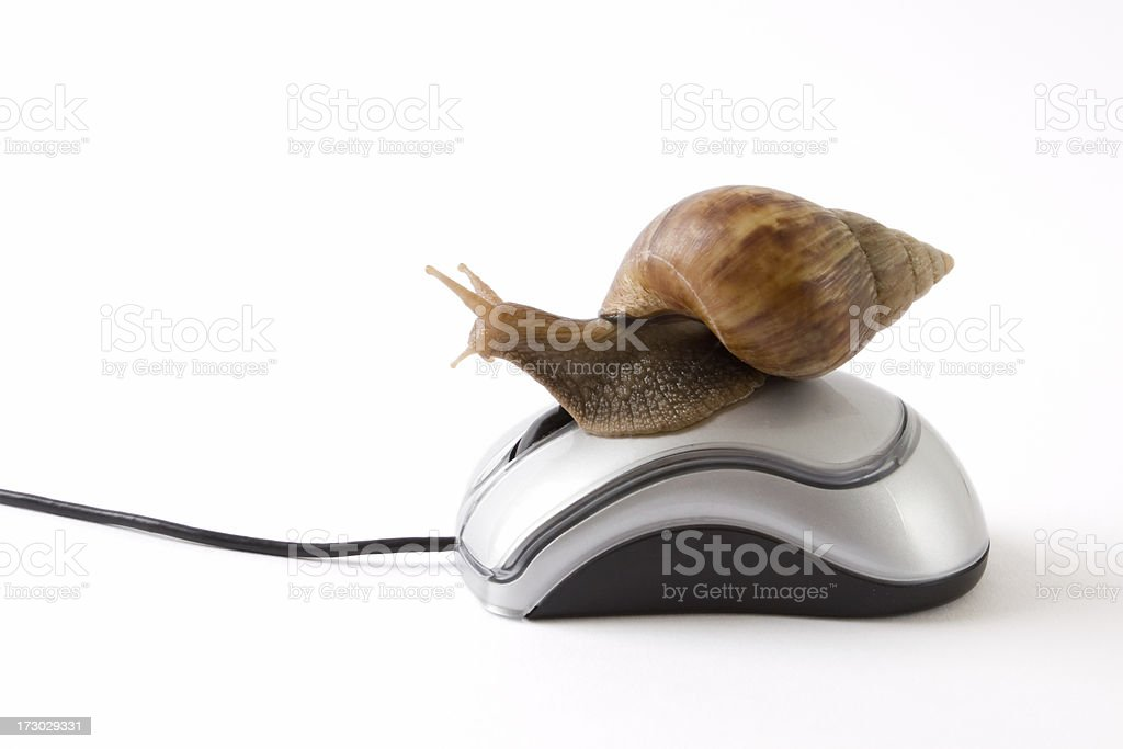 Snail looking out on mouse royalty-free stock photo
