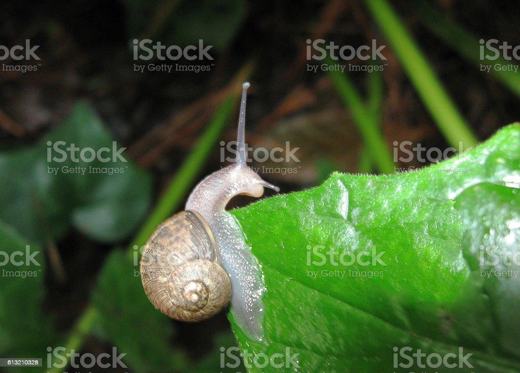 Snail Macro stock photo