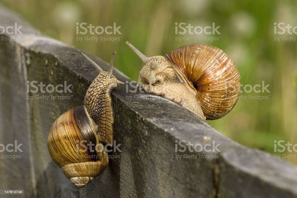 snail meeting royalty-free stock photo