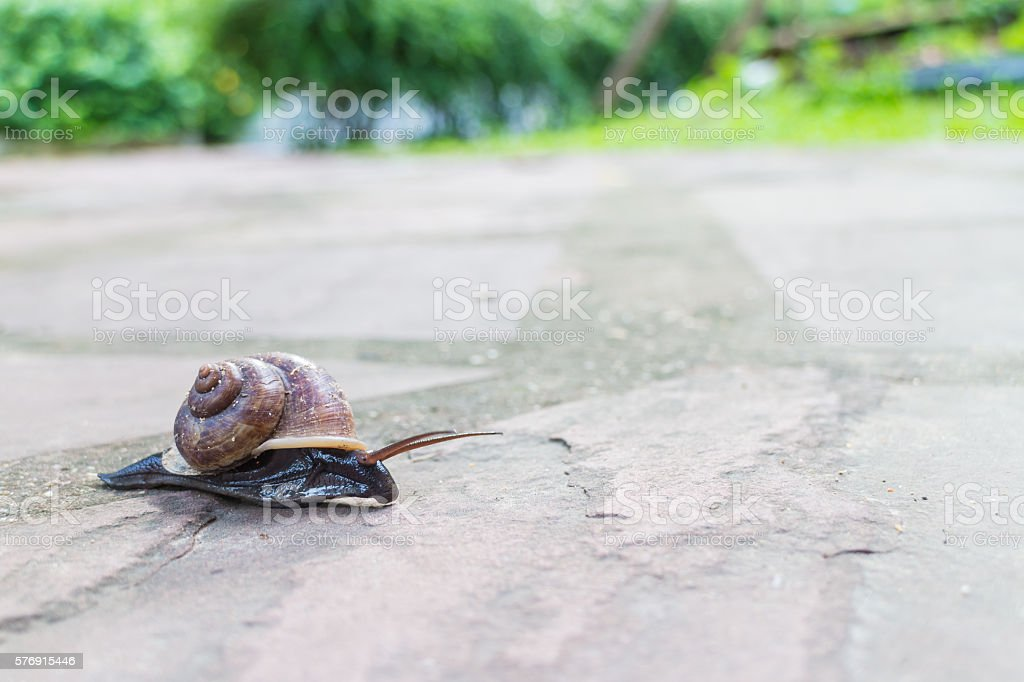 Snail moving on the street stock photo