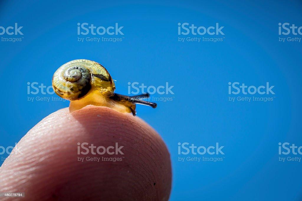 Snail on a fingertip stock photo