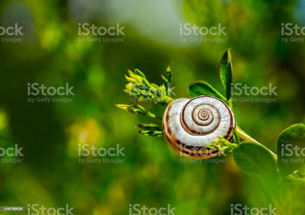 Snail on a grass stock photo