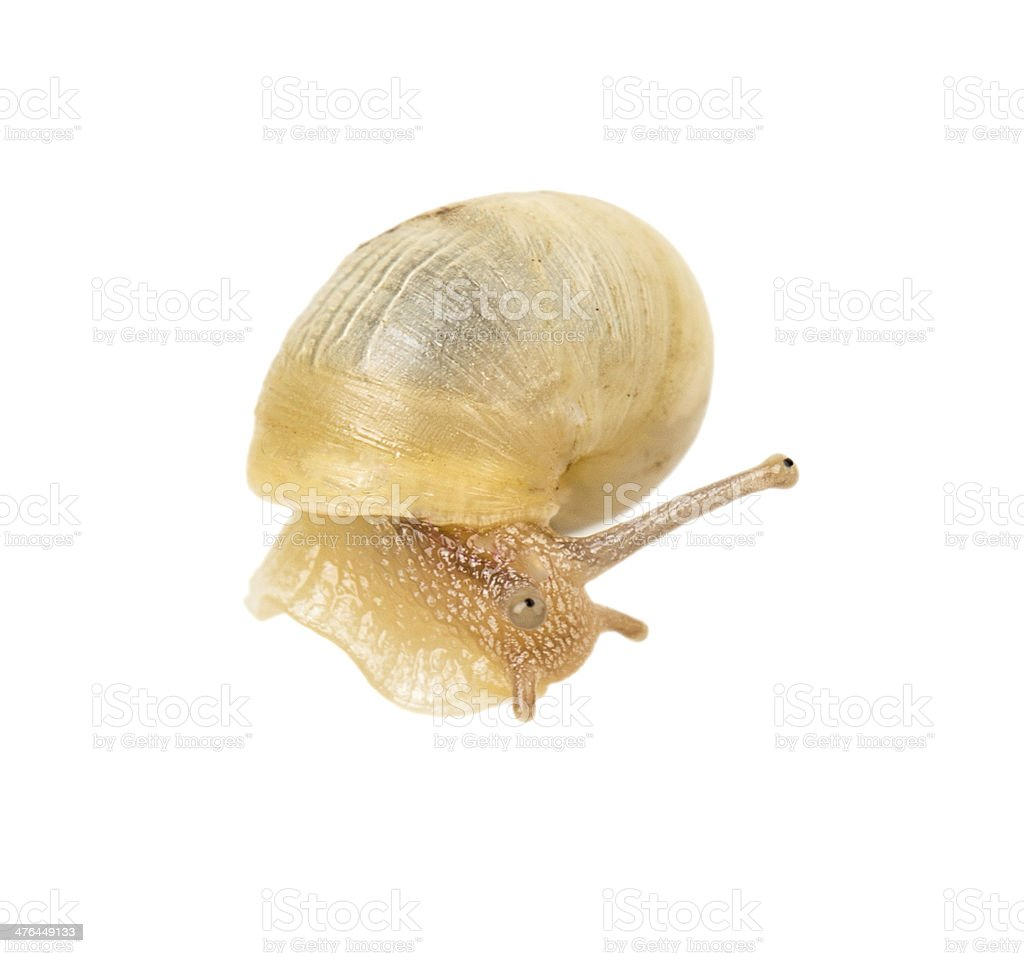 snail on a green spine royalty-free stock photo