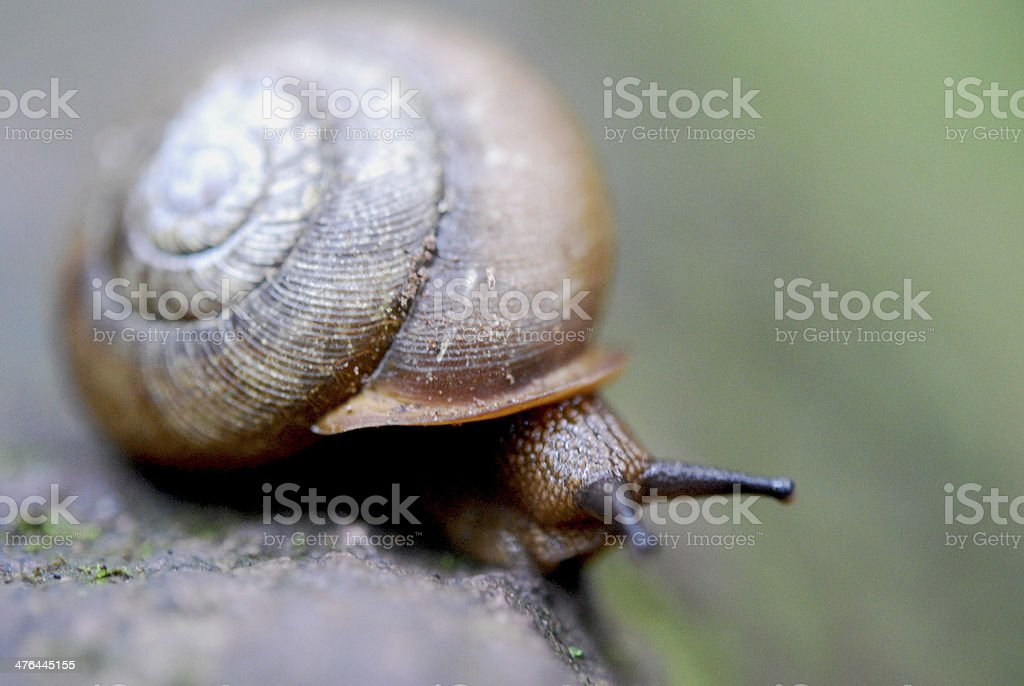 Snail on a Mossy Rock royalty-free stock photo