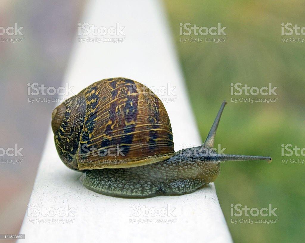Snail on a Rail stock photo