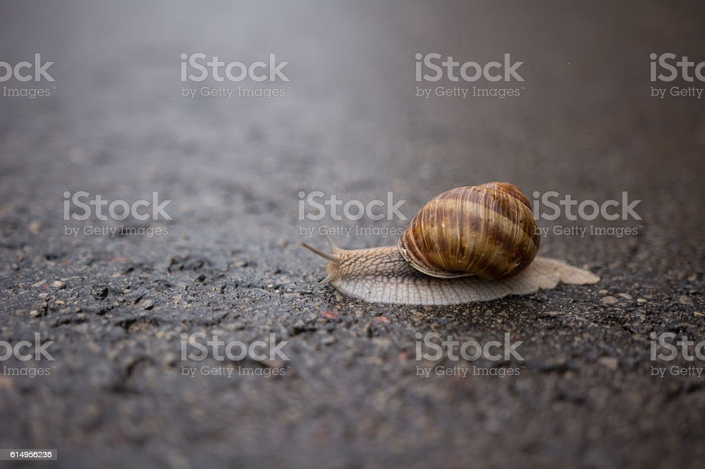 Snail on a rainy day stock photo
