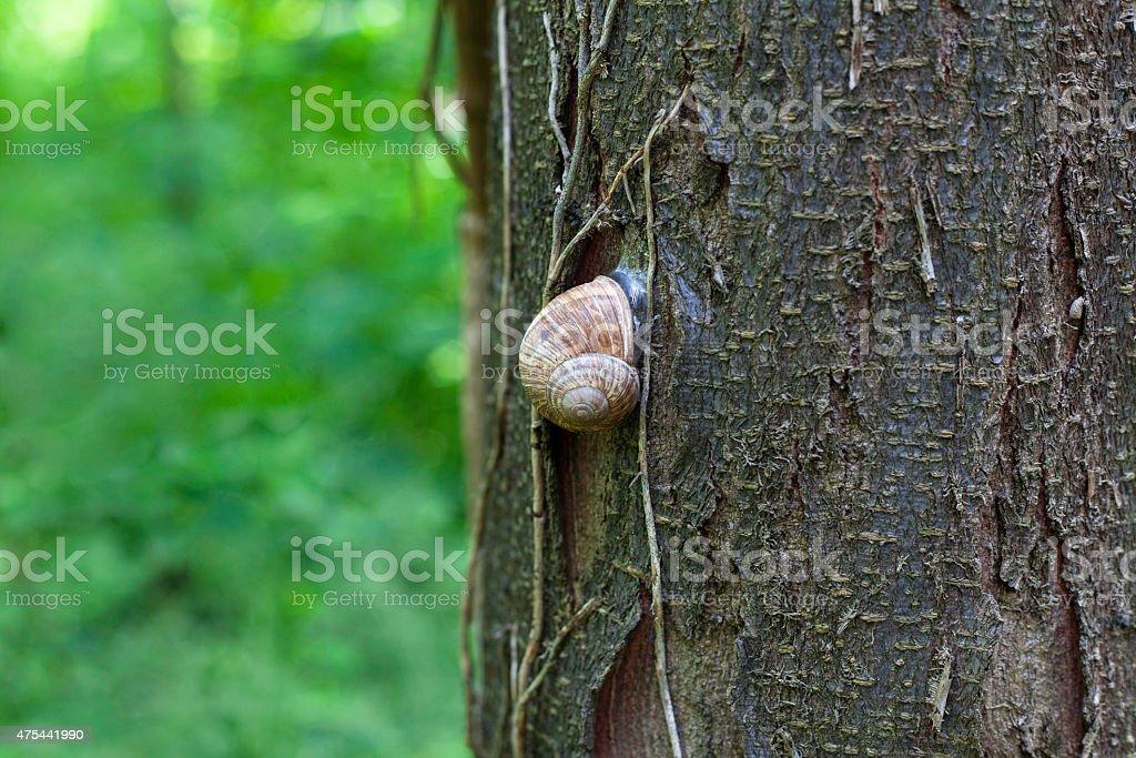 Snail on a tree royalty-free stock photo