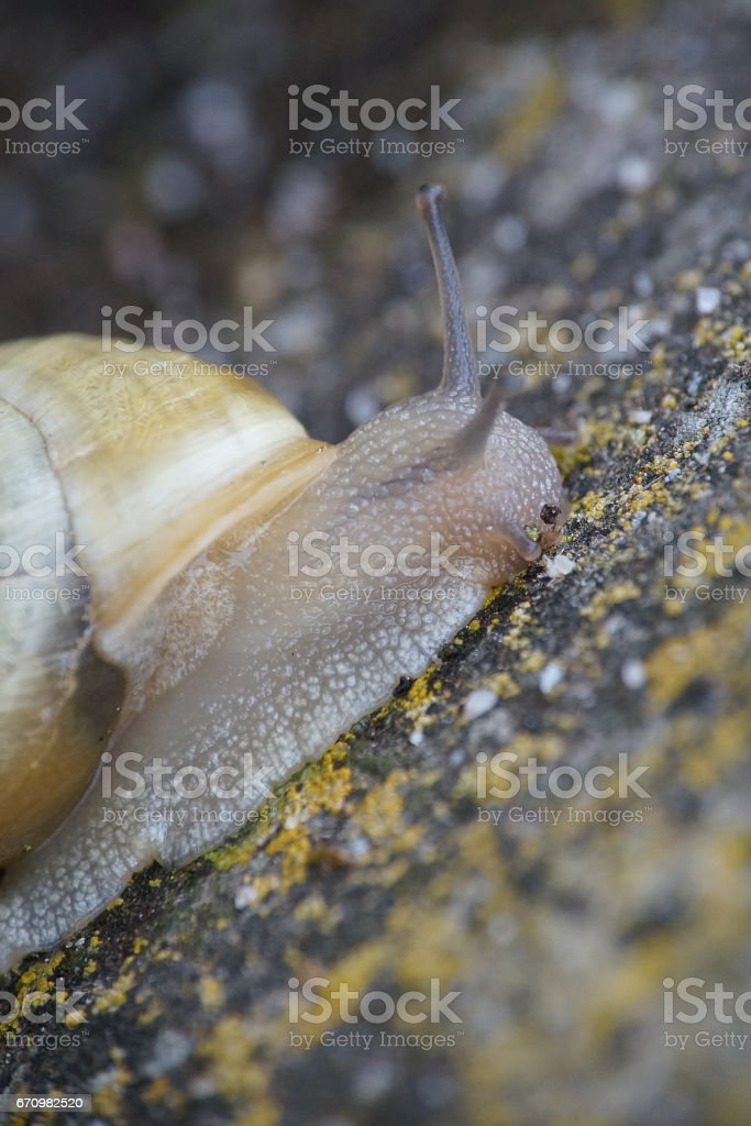 snail on a wall stock photo