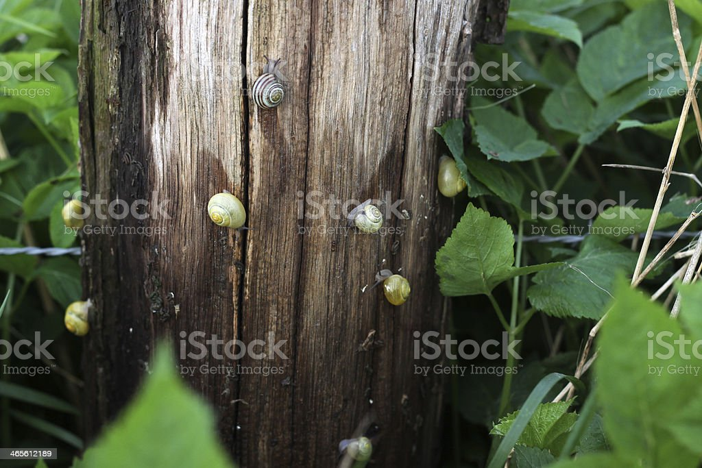 Snail on a wet fence post stock photo