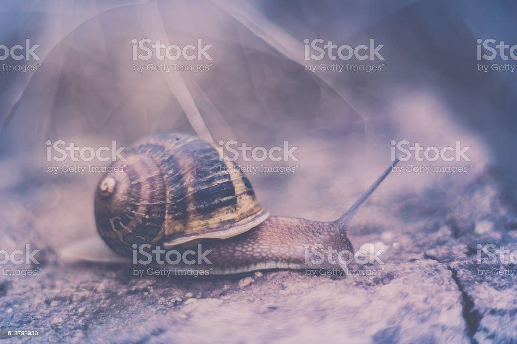 Snail on brick stock photo