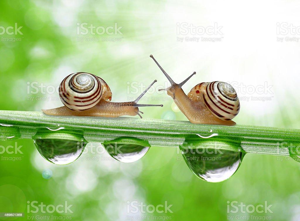 Snail on dewy grass stock photo