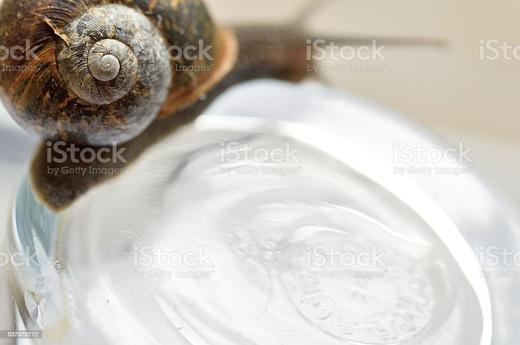 Snail on glass stock photo
