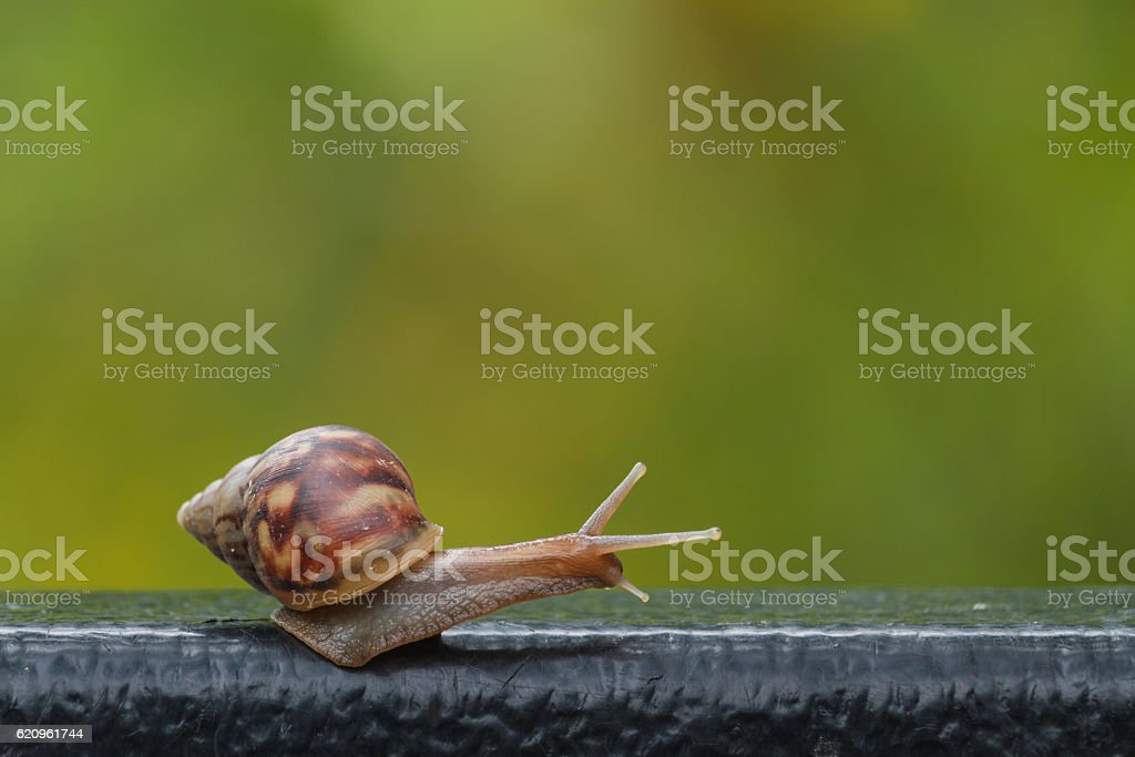 snail on green blur background stock photo