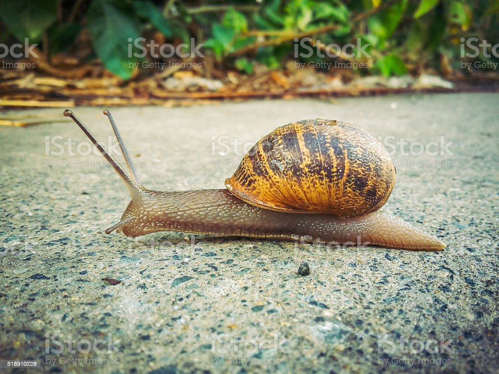 Snail on his way stock photo