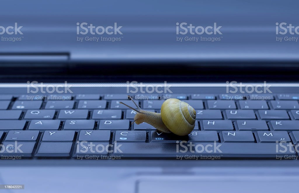 Snail on keyboard stock photo
