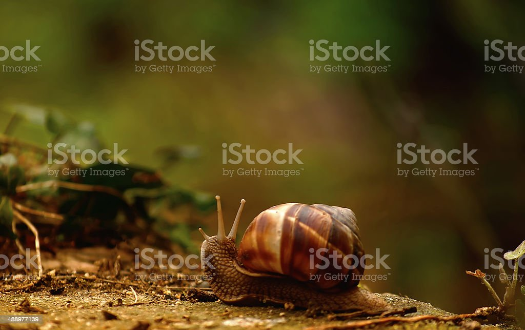Snail on lawn royalty-free stock photo