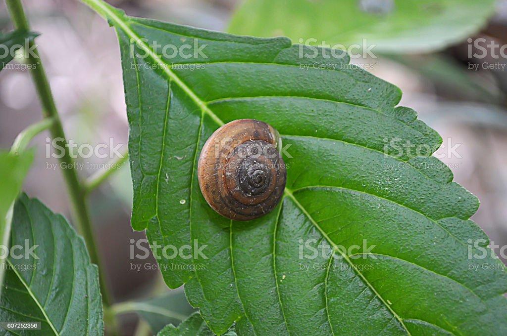Snail on leaf background. stock photo