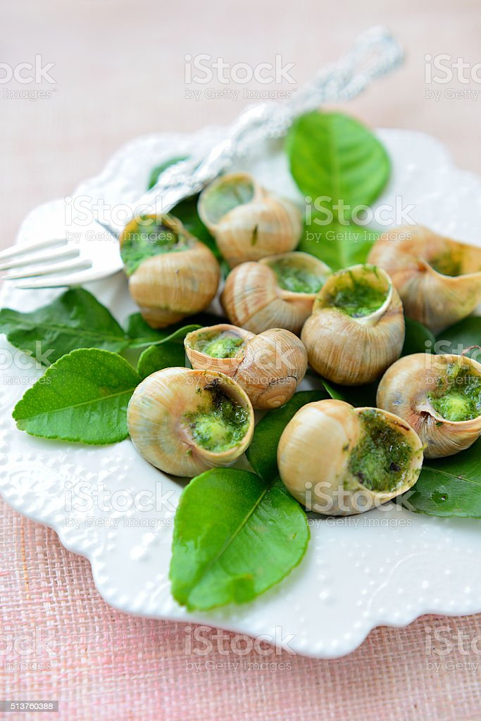 Snail on leaves of lime stock photo