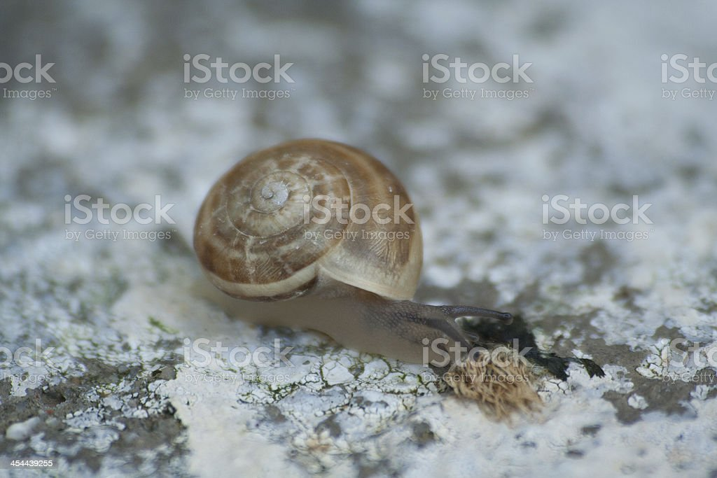Snail on lichen royalty-free stock photo