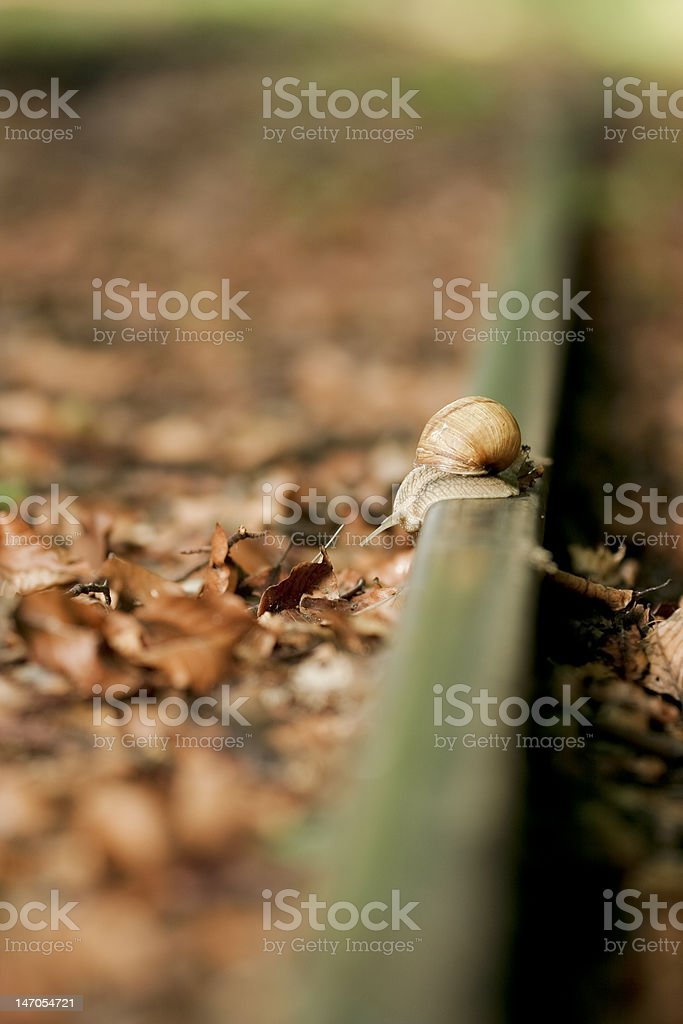 snail on rail royalty-free stock photo