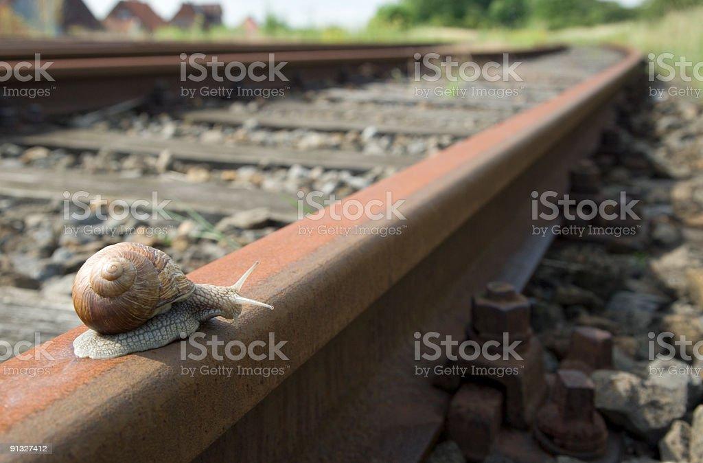 Snail on railway track (XL) stock photo