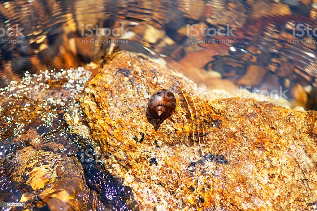 Snail on rock in river Phetchaburi stock photo