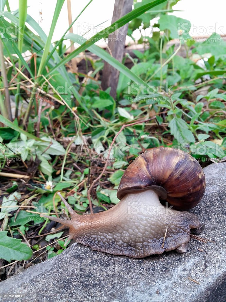 snail on sidewalk stock photo