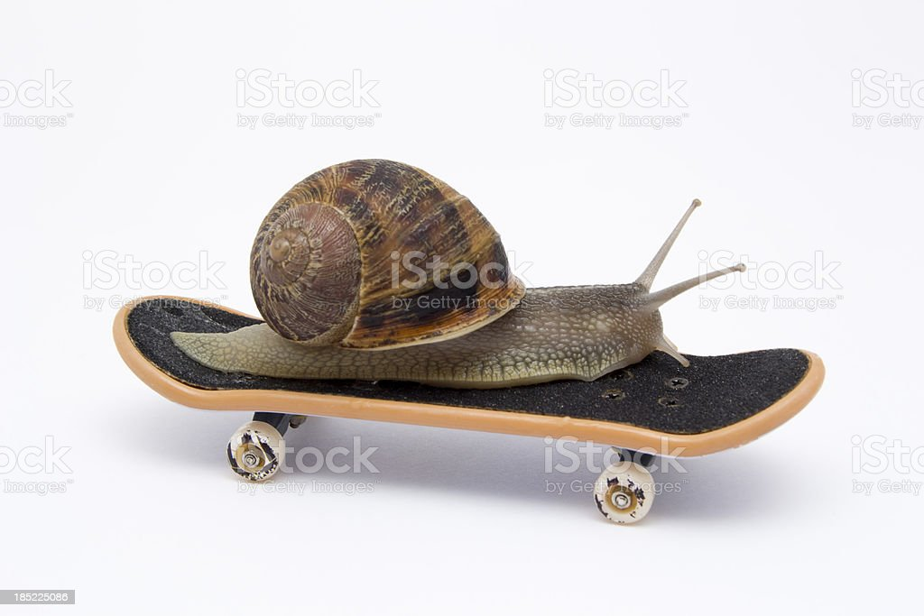 Snail on Skateboard stock photo
