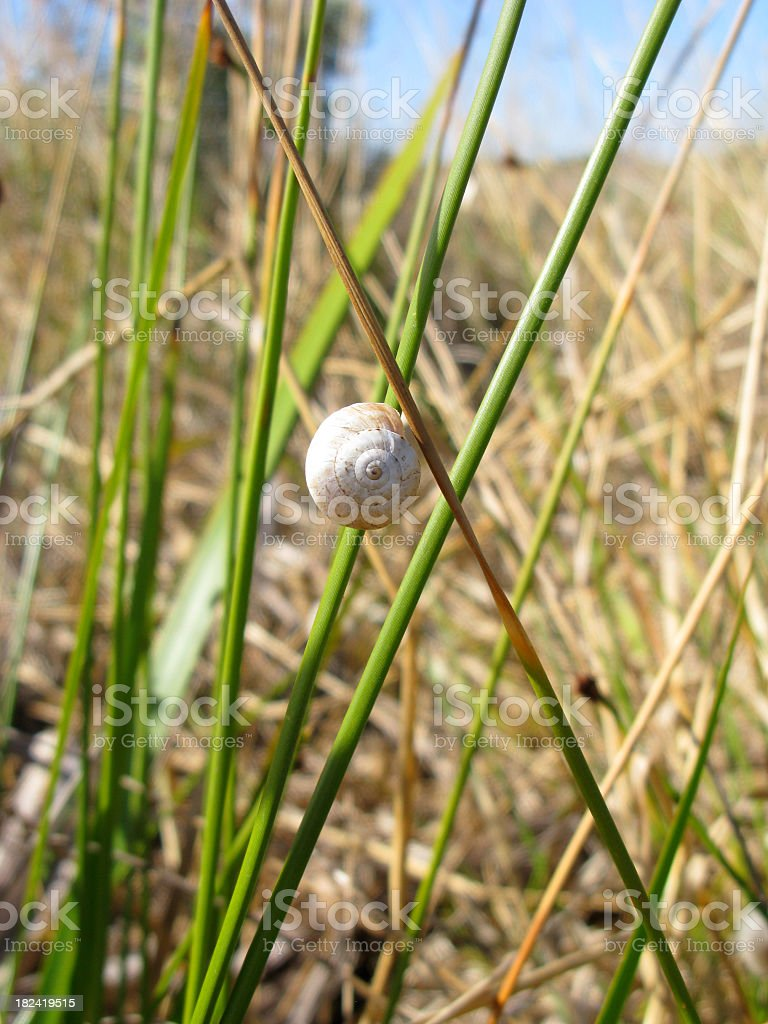 Snail on the grass stock photo