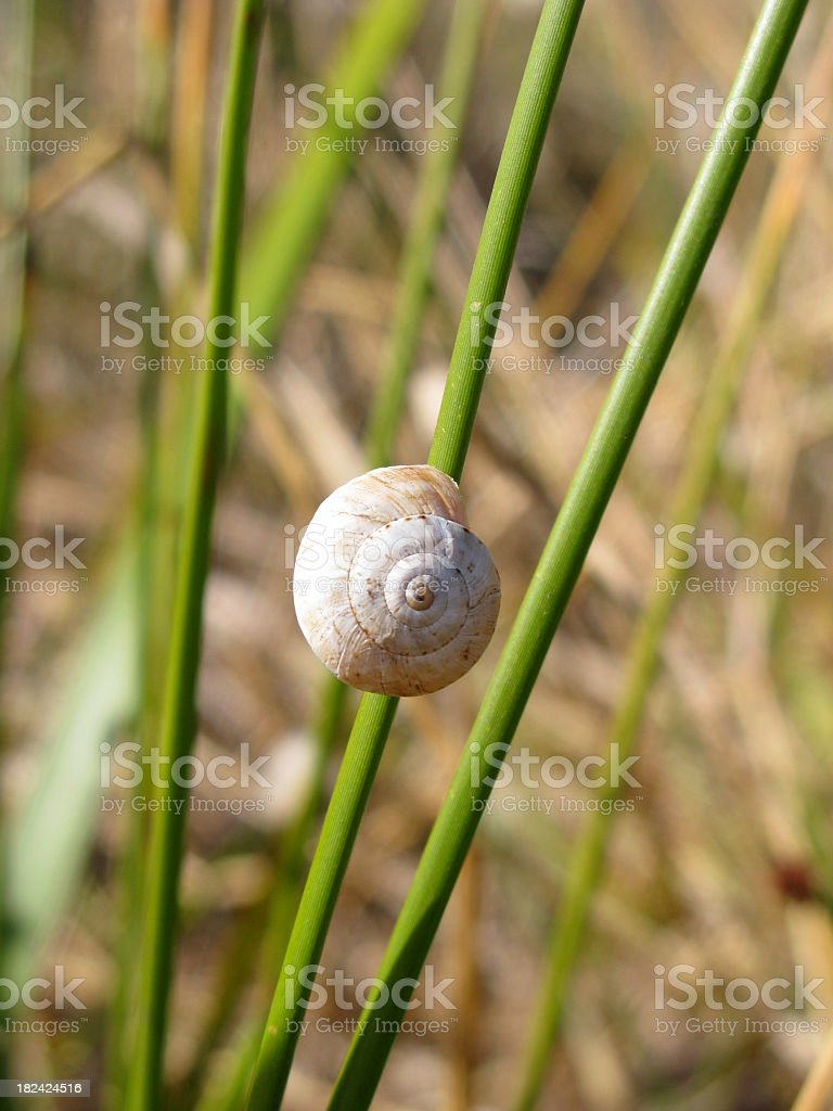 Snail on the green leaf stock photo