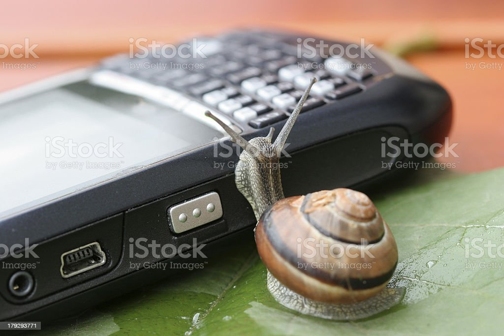 Snail on the phone royalty-free stock photo