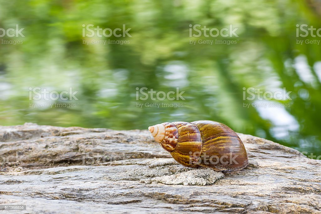 Snail on the stone in garden stock photo