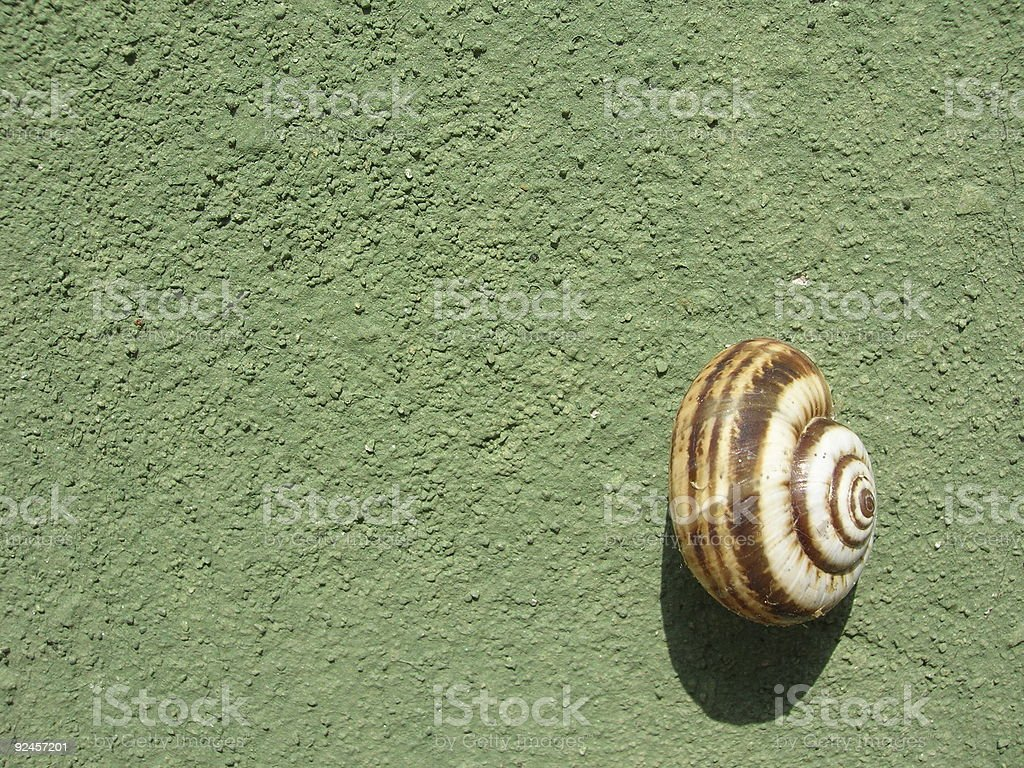 Snail on the Wall royalty-free stock photo
