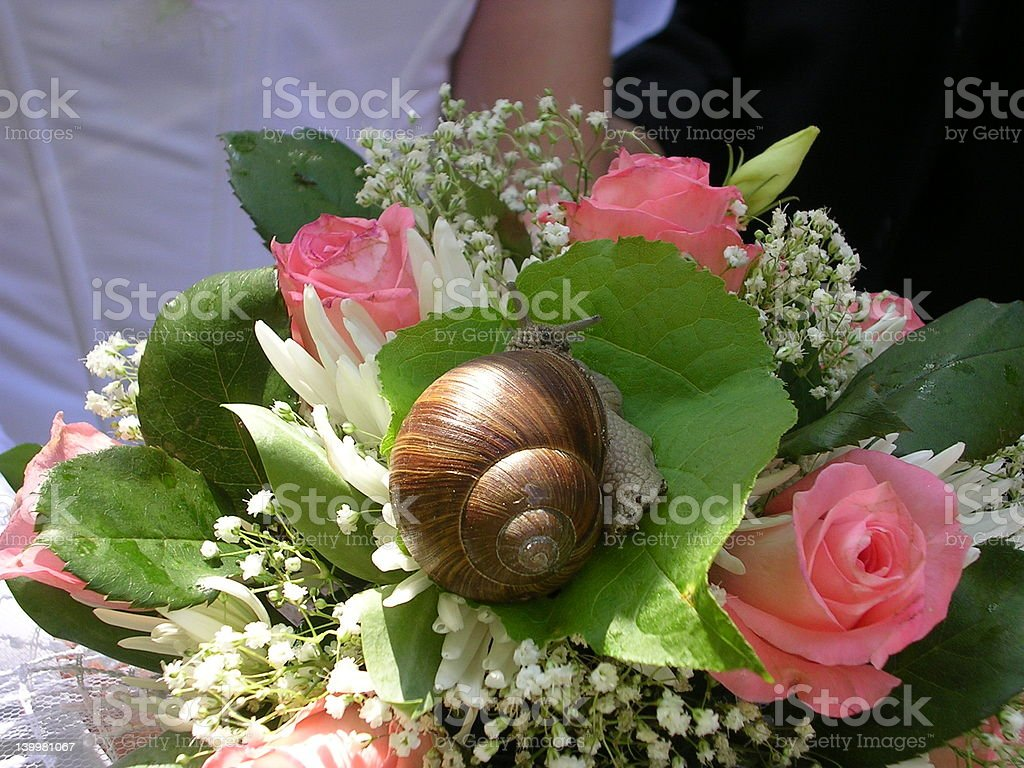 Snail on the wedding bouquet royalty-free stock photo
