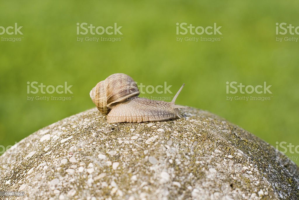 Snail on top of the hill royalty-free stock photo