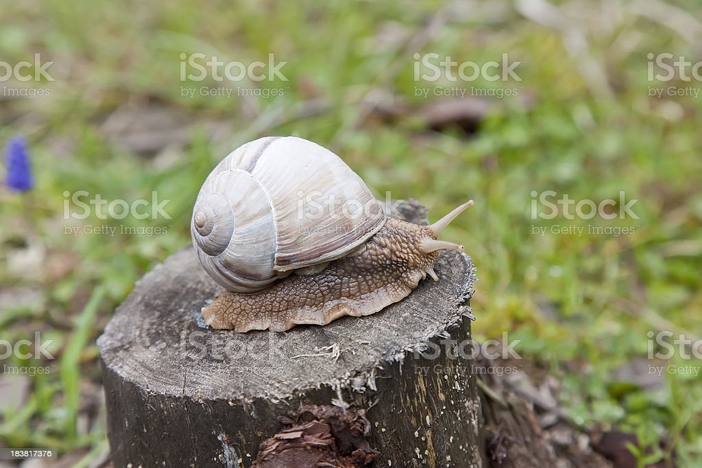 Snail on tree stock photo