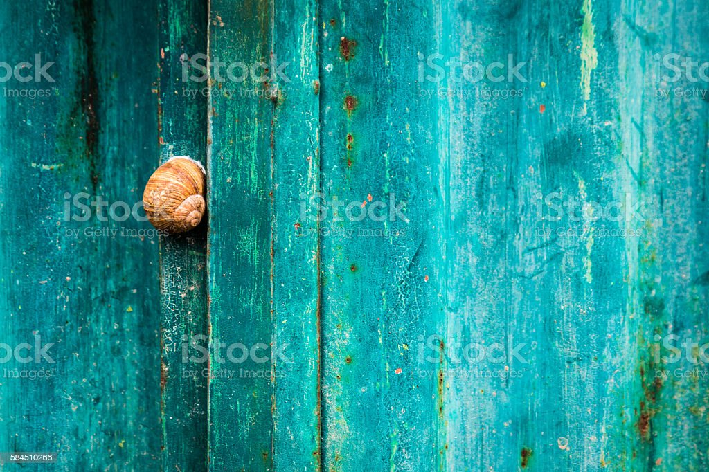Snail on weathered aqua blue corrugated metal background stock photo