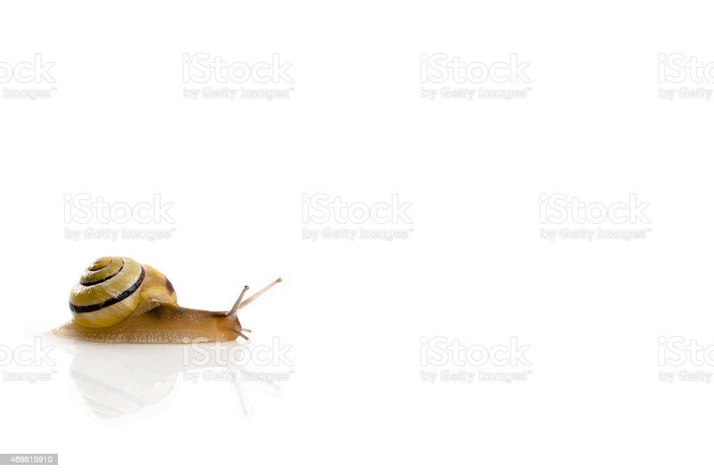 snail on white stock photo