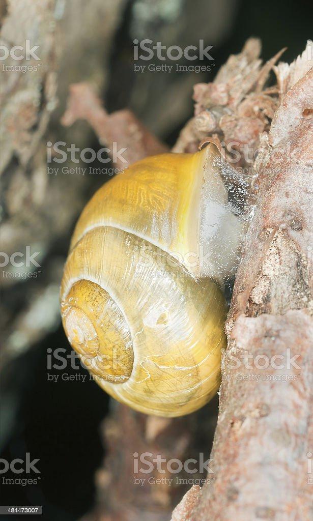 Snail on wood stock photo