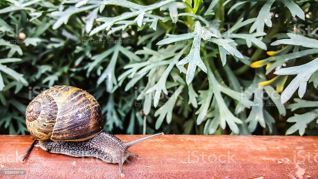 Snail on wood with flowers stock photo