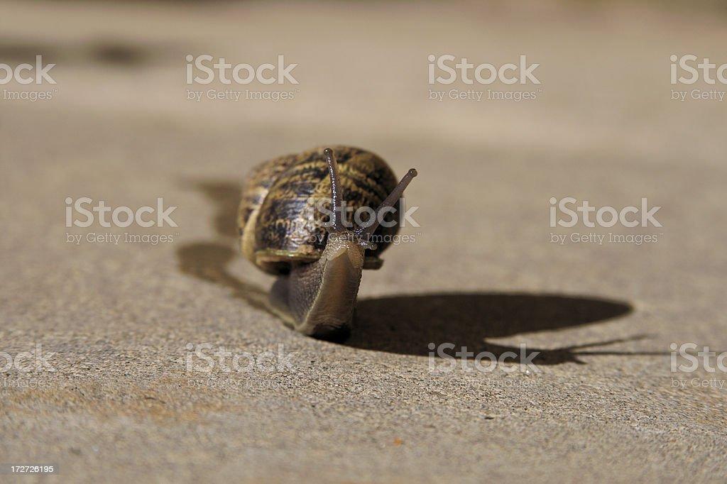 Snail (Gastropod) royalty-free stock photo