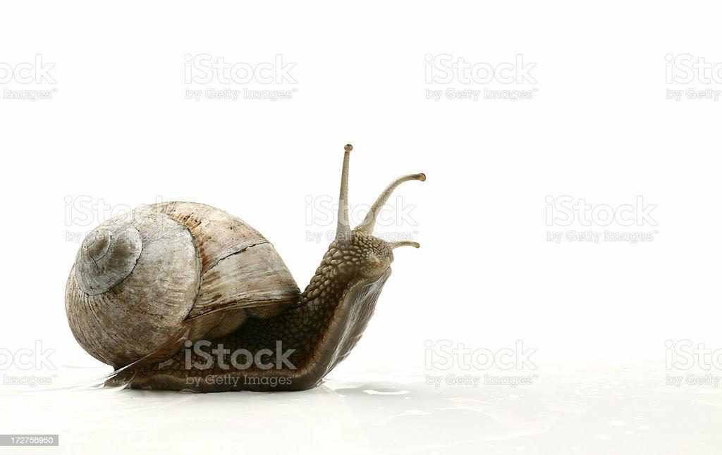 snail stock photo