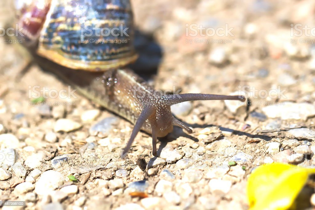 Snail portrait on the ground - close up stock photo